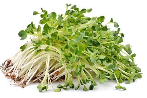 Alfalfa Sprouts 12/4 ounce