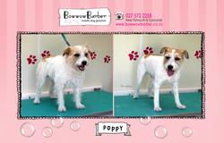BB FB Post 119 Poppy