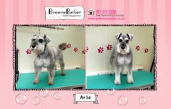 BB FB Post 124 Arlo copy