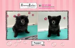 BB FB Post Pepper copy