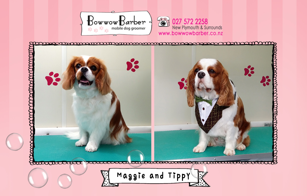 BB FB Post 21 Tippy and Maggie copy