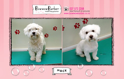 BB FB Post 103 Mack