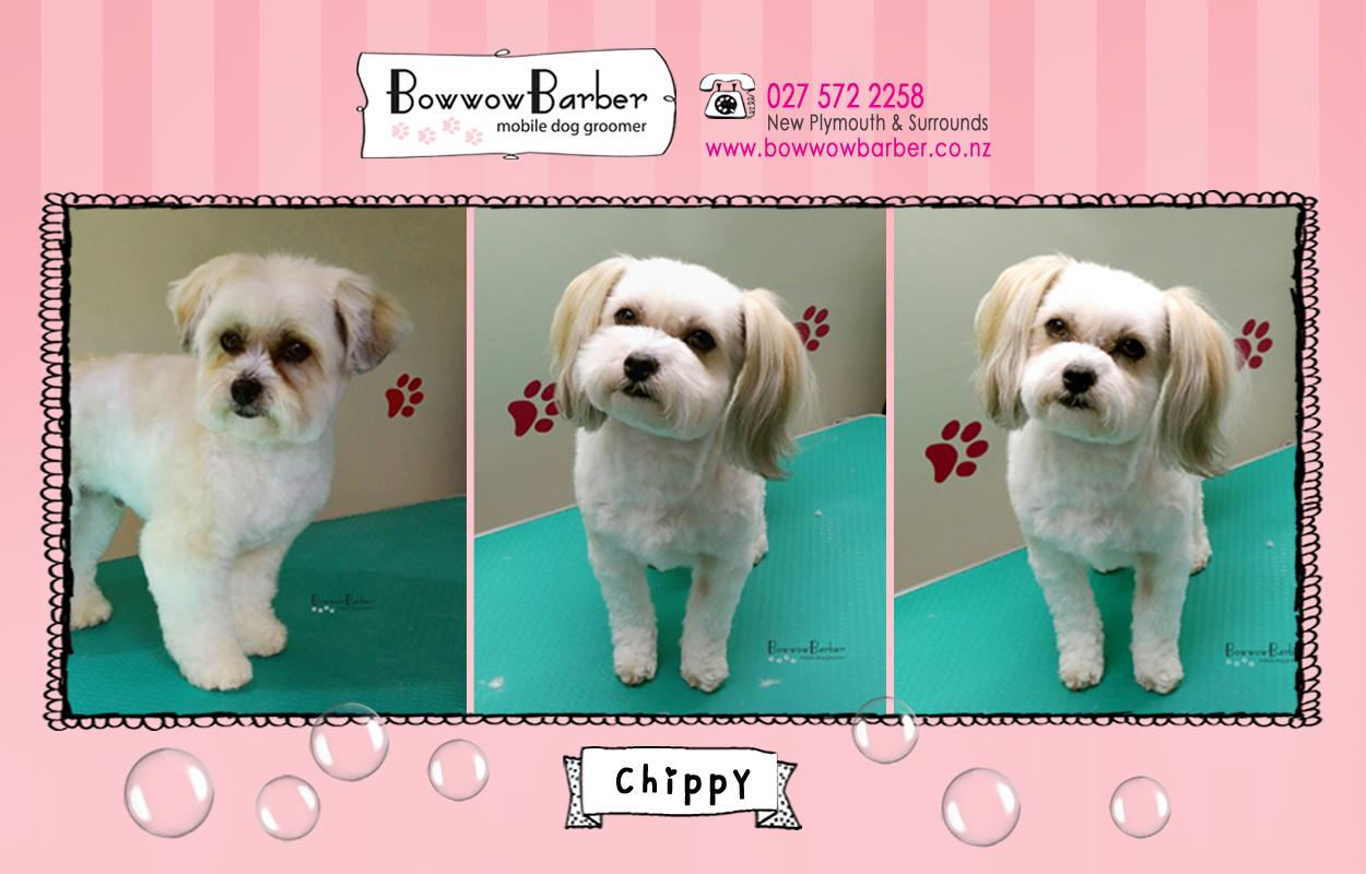 BB FB Post 110 Chippy copy