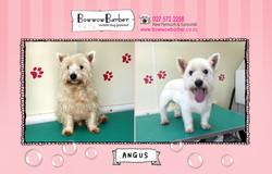 BB FB Post Angus copy