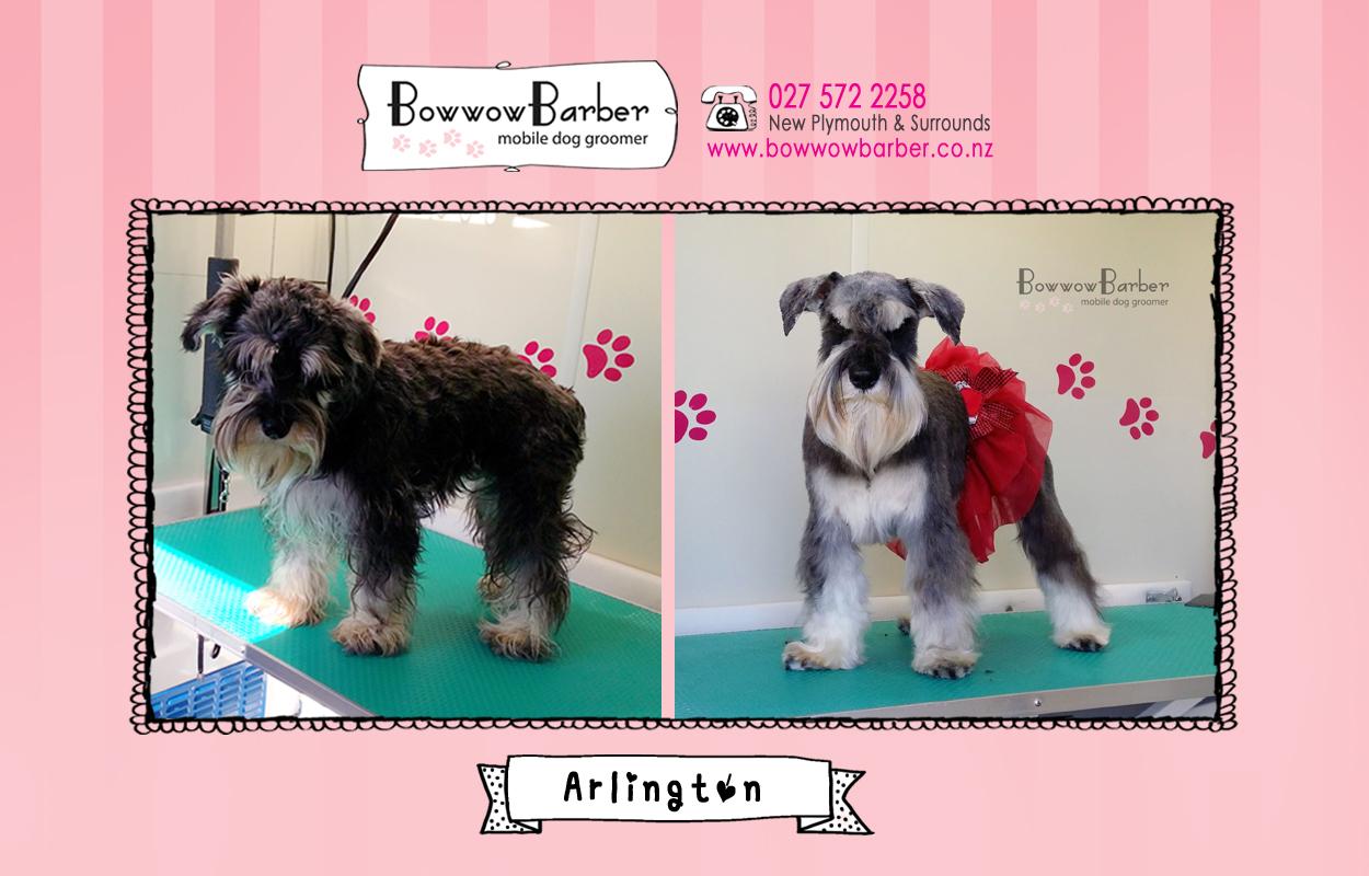 BB FB Post 15 Arlington copy