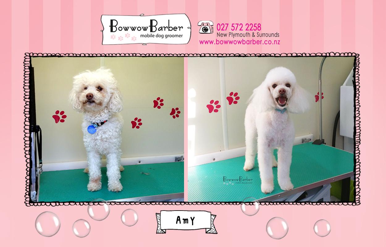 BB FB Post 46 Amy copy