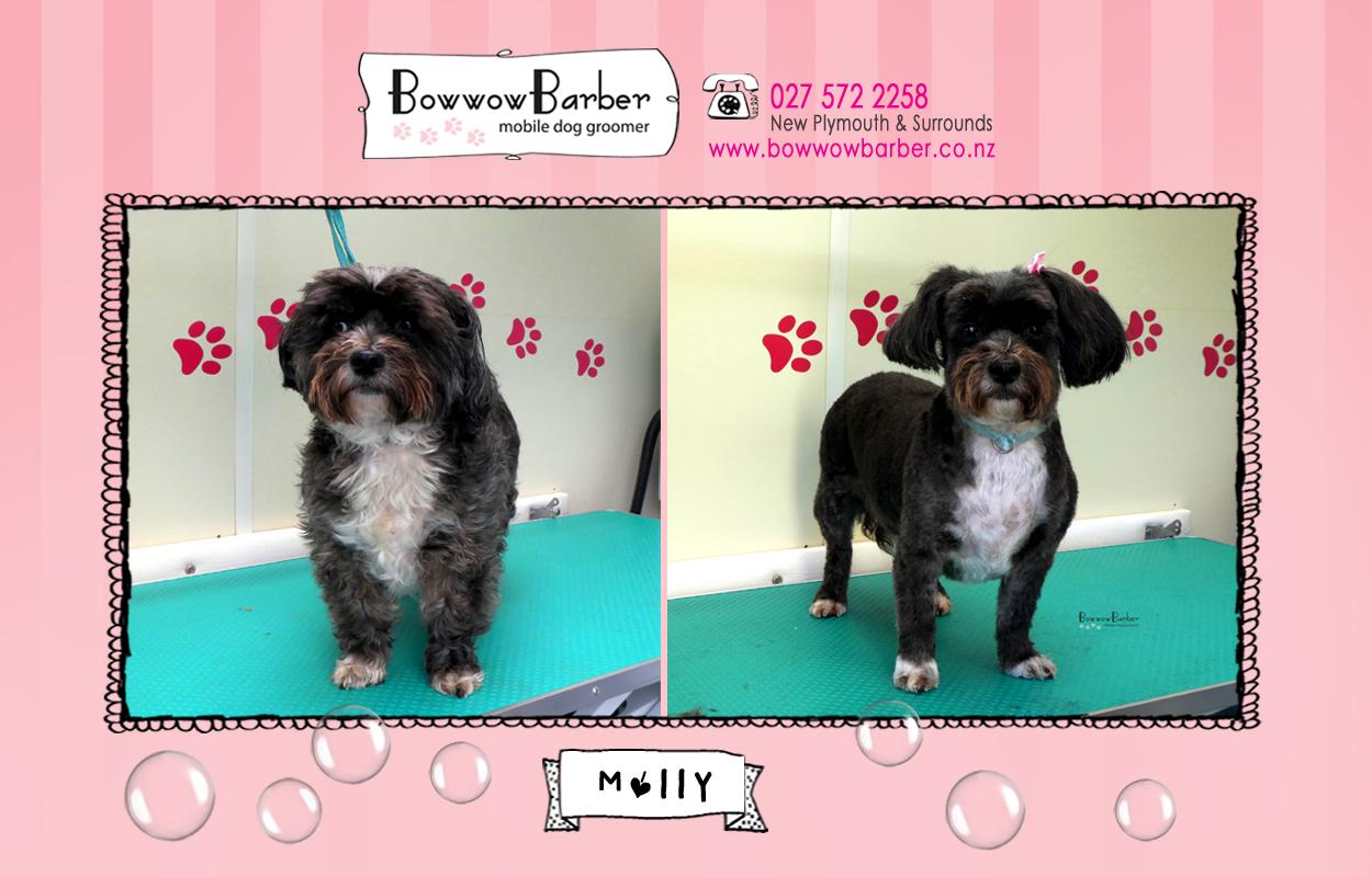 BB FB Post 105 Molly copy