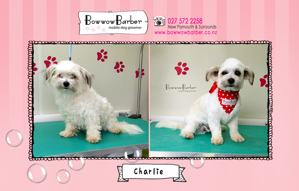 BB FB Post 36 Charlie copy