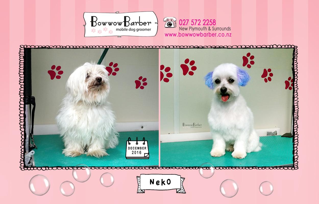 BB FB Post 75 Neko copy