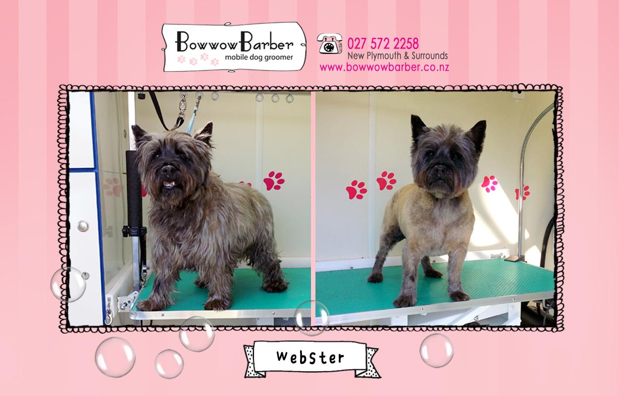 BB FB Post 28 Webster copy