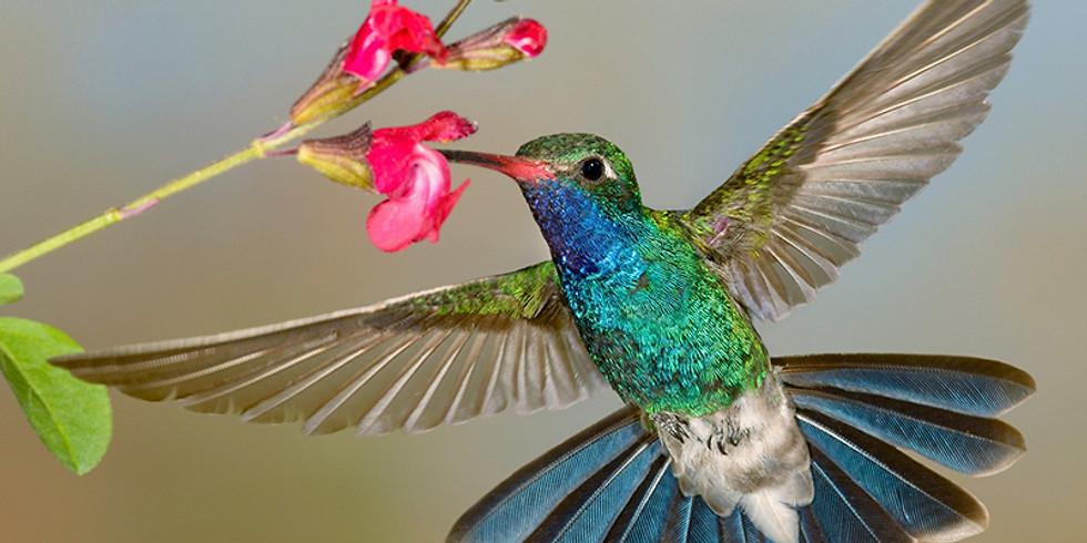 Alan Murphy - Bird Photography Tips Part 1