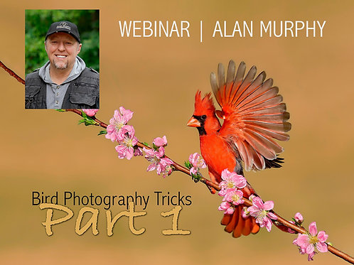 Alan Murphy Bird Photography Tricks Part 1