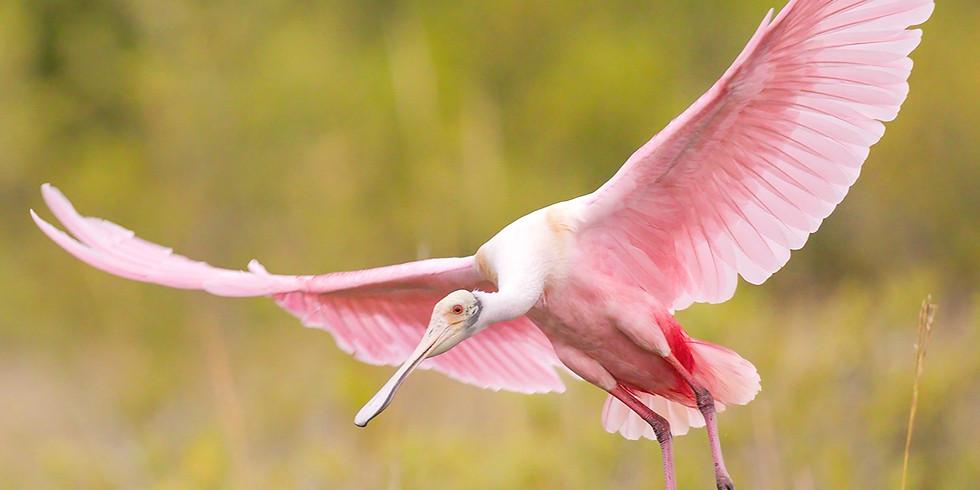 Birds of Florida Winter Workshop 2021
