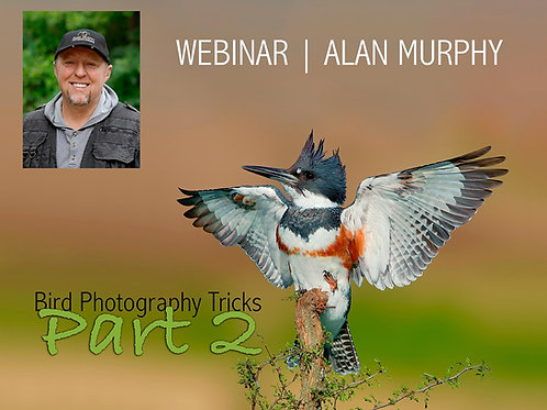 Alan Murphy - Bird Photography Tricks Part 2