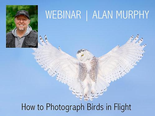 Alan Murphy How to Photograph Birds in Flight