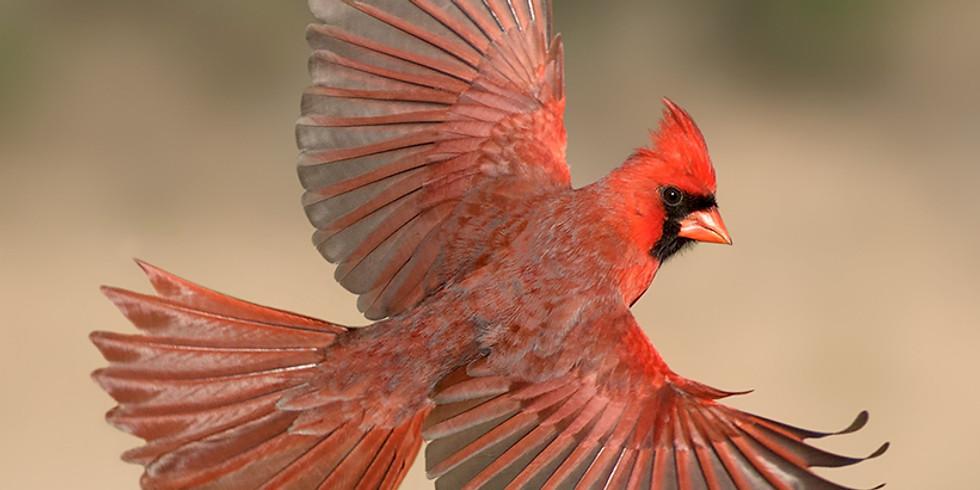 Alan Murphy - How to Photograph Birds in Flight