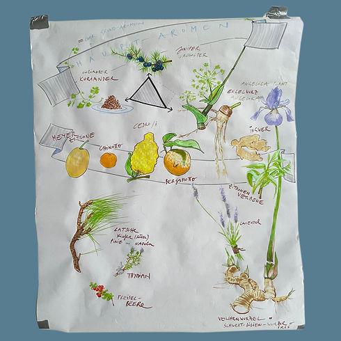 dickandstein_gin_BOTANICALS_06_drawing.j