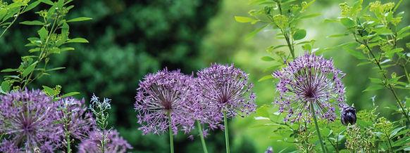 Web_Gartentherapie_2-01.jpg
