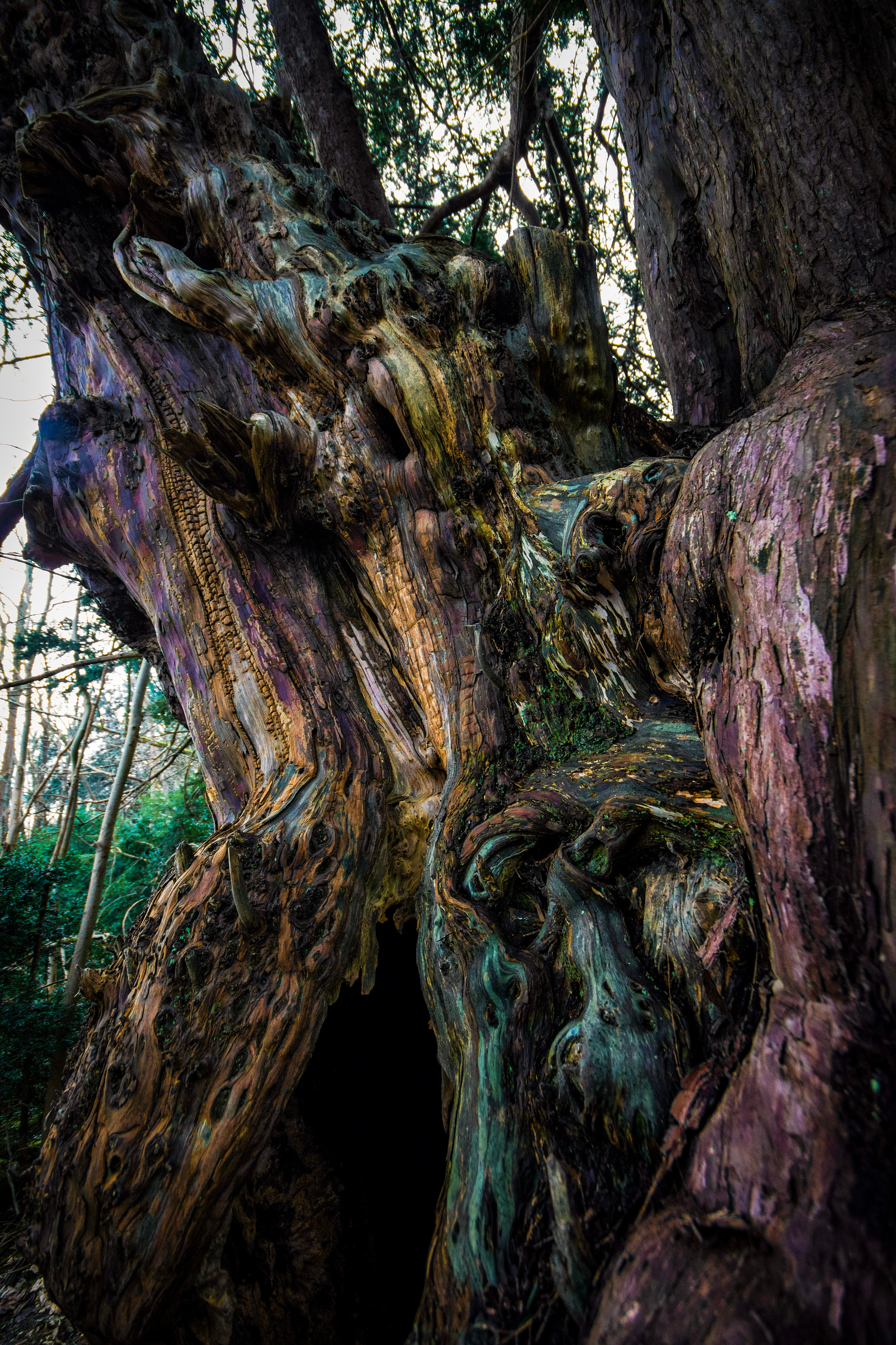 Domesday Yews and amazing views