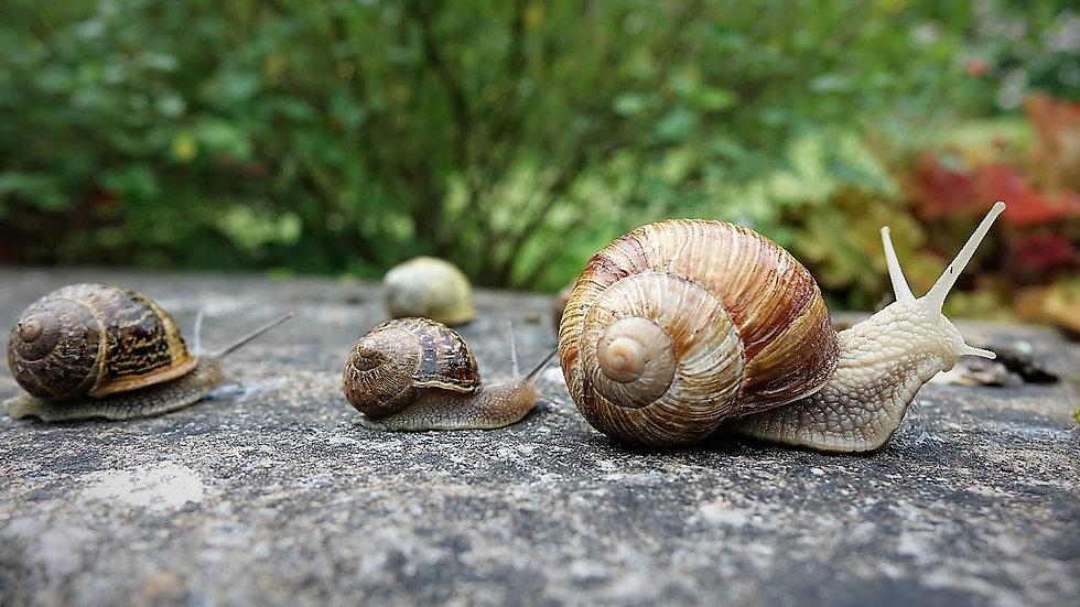Snails (2).JPG