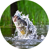 Fishing icon.png