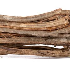 Corkscrew Liana Vine