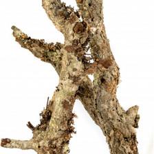Bulk Cork Branches