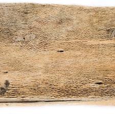 Cactus Bark