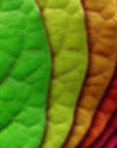 hd-nature-wallpapers-51.jpg