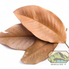 Magnolia Leaves