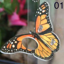 C3 Orange Butterfly Ledge