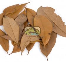 Live Oak Leaves
