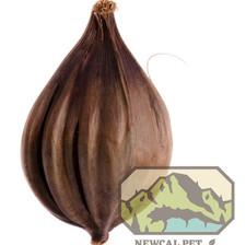 Nipa Pod