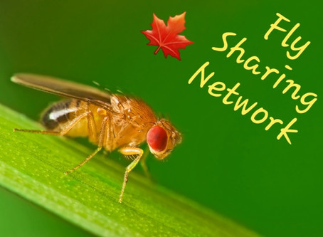 Fly Sharing Network
