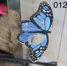 C3 Blue Butterfly Ledge