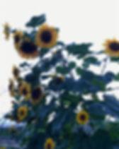 IMG_0008_edited.jpg