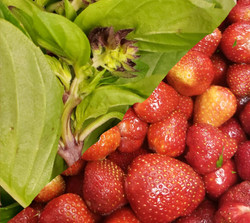 Hood Strawberry with Thai Basil