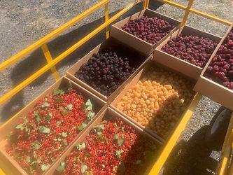 currants, raspberries, tayberries, boysens