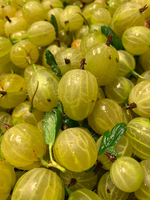 Green Gooseberry Jalm