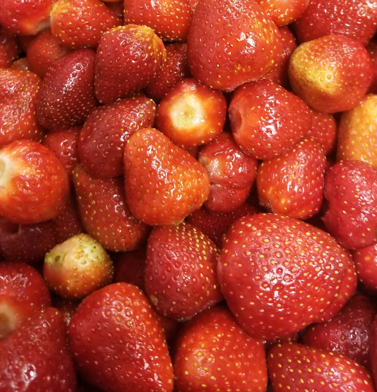 Hood Strawberry