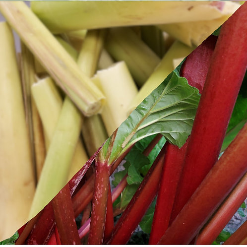 Rhubarb and Lemongrass Jalm