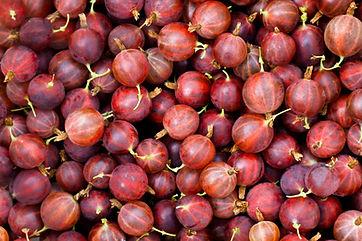 gooseberry-PQHDD7G.jpg
