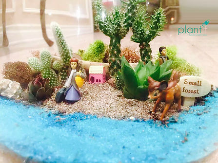 plantit succulent, plants for home, plants for office, terrarium, arrangments