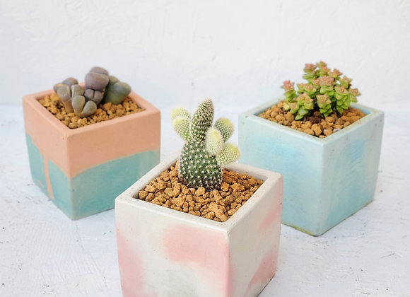 Cube Cement Pot with Plant