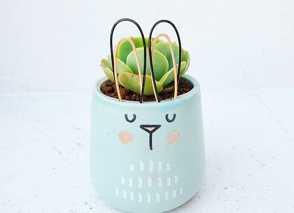 Bunny Planter with Succulent
