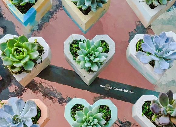 Heart Shape Cement with Succulent