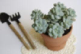 多伦多小盆栽, 多肉植物, plantit succulent, succulent in markham, succulent in toronto, succulent in canada