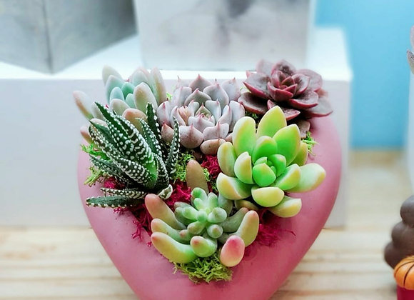 Handmade Heart Shape Planter Succulent Arrangment