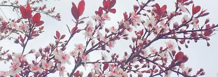 SpringImage.png