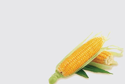 all natural corn starch tableware